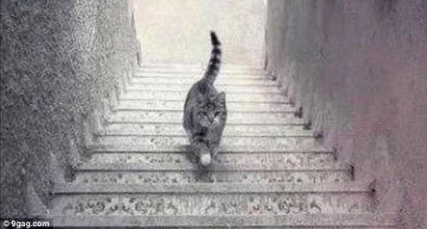 enigme-chat-escalier-descend-monte-
